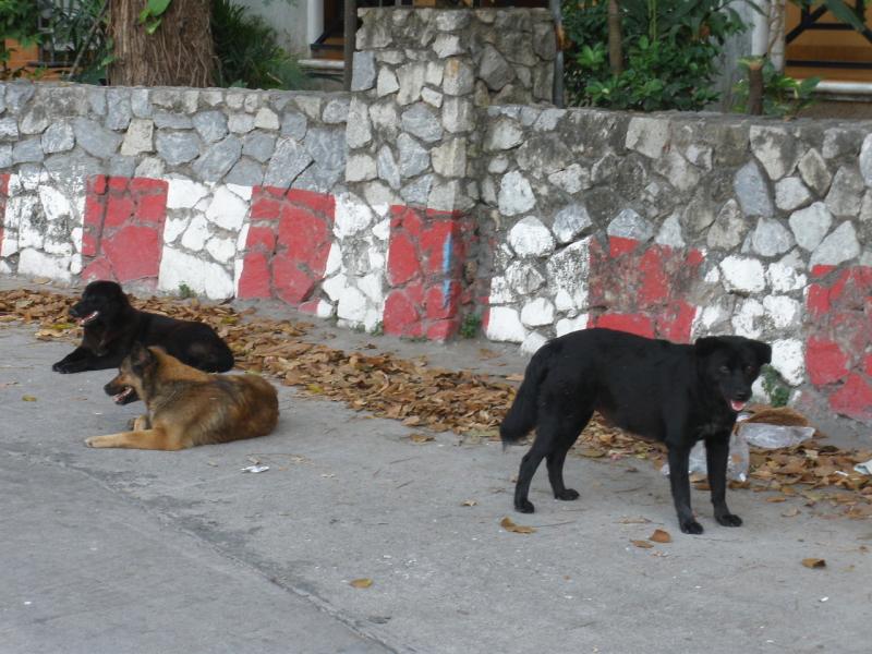 thai-dog
