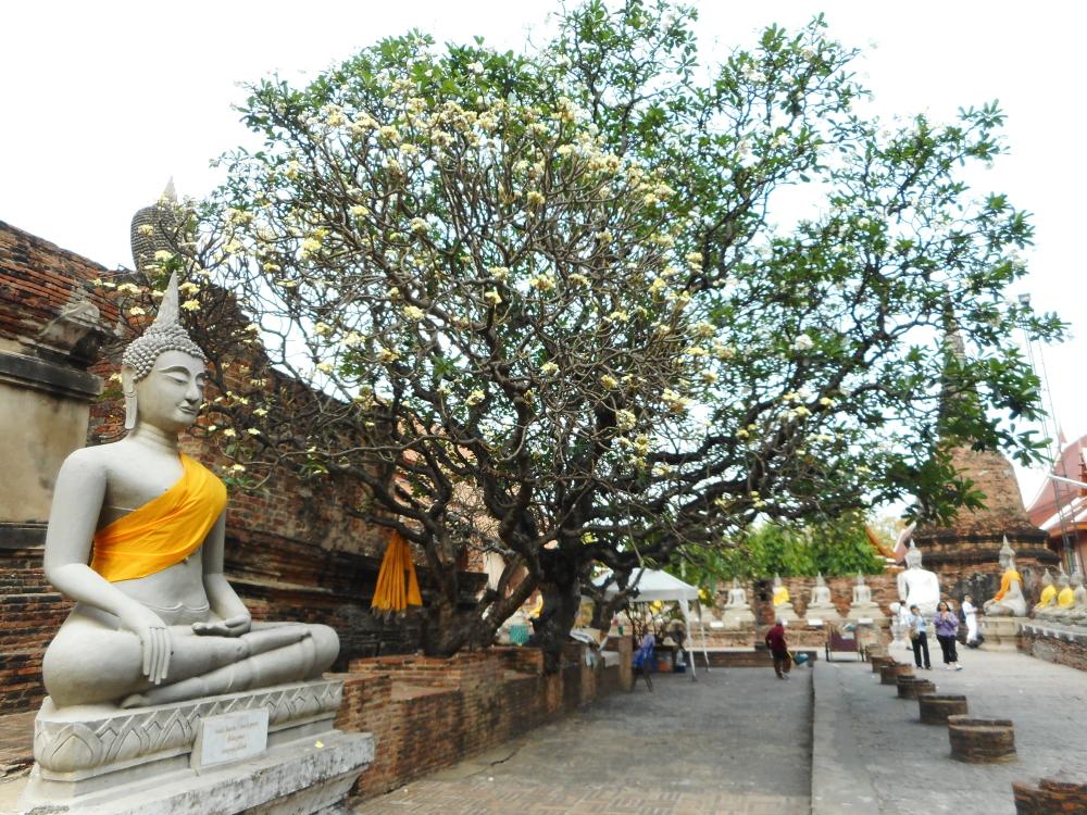 ayutthaya_thai41